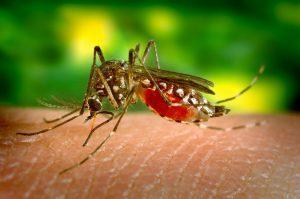 ספריי נגד יתושים