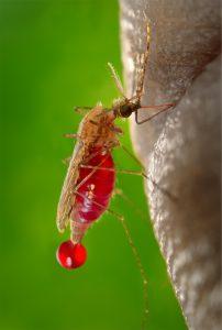 תכשיר נגד יתושים